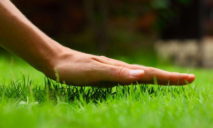 Jak pečovat o trávník? 14 rad pro každé roční období